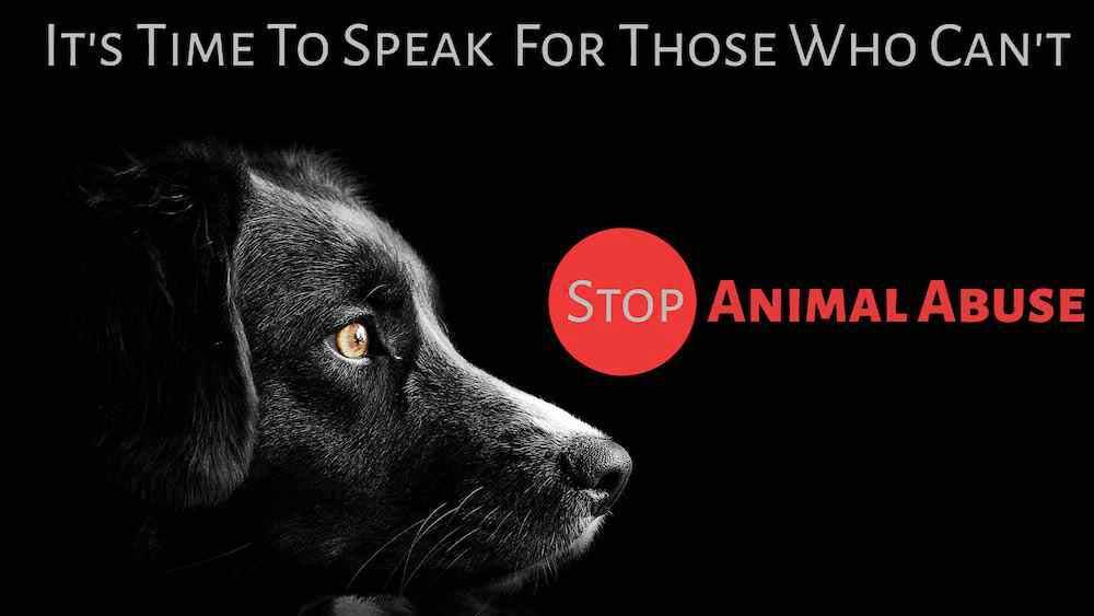 stop-animal-abuse
